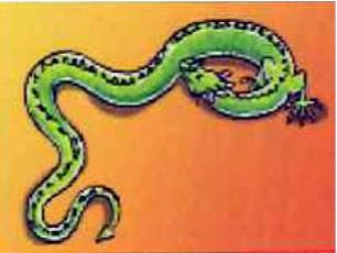 drakensoorten1